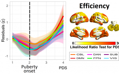 Development of the Brain Functional Connectome Follows Puberty-Dependent Nonlinear Trajectories